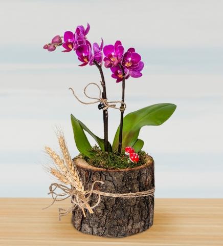 Kütük içinde Minyatür Orkide