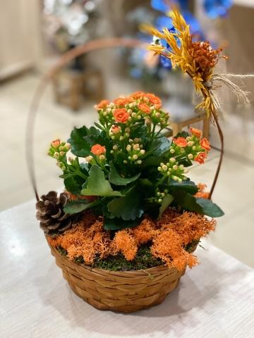 Sepet İçinde Kalançho Çiçeği 1