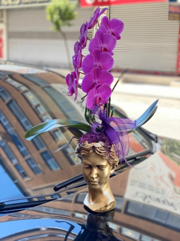 Helena Saksıda Fuşya Orkide