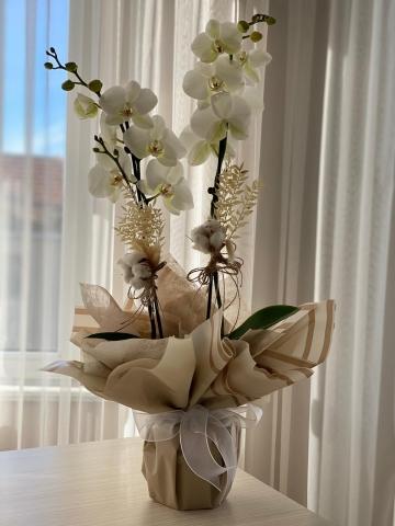 Vip Beyaz Orkide