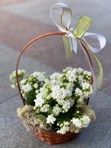 Sepet İçinde Kalançho Çiçeği 4