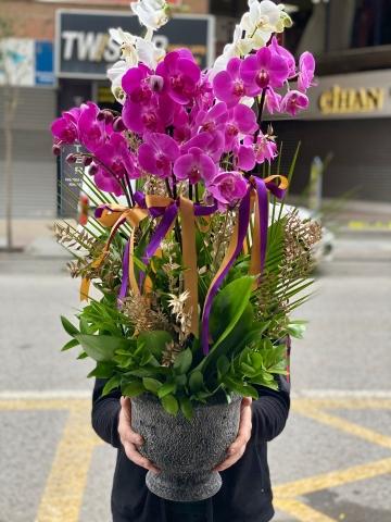 Orkide Arajmanı