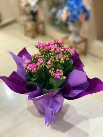 Saksı Çiçeği 1