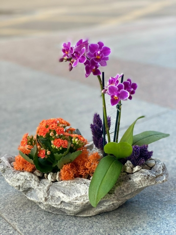 Taş Saksıda Mini Orkide ve kalançho