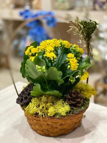 Sepet İçinde Kalançho Çiçeği 3