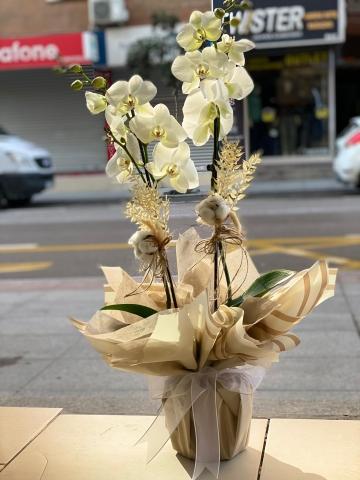 Beyaz Orkide 6