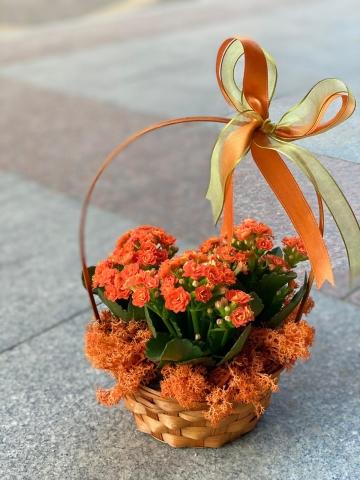 Sepet İçinde Kalançho Çiçeği 5