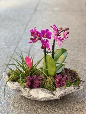 Taş Saksıda Orkide ve Sukulent
