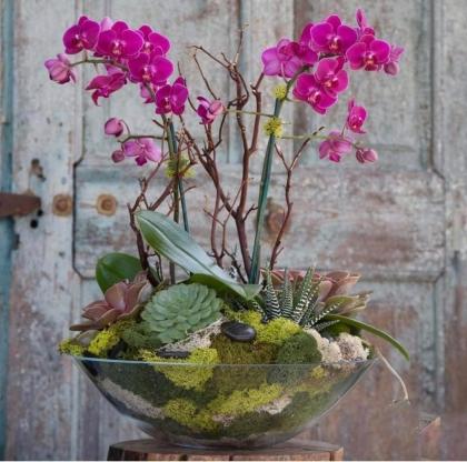 Fuşya Orkideli Aranjman