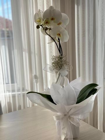 Beyaz Orkide 5