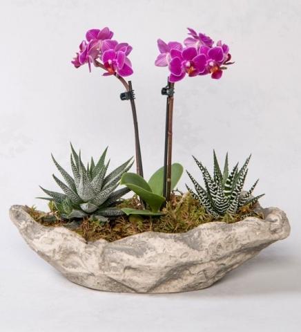 Minyatür Orkide Aranjmanı