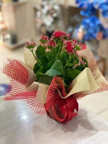 Saksı Çiçeği 2