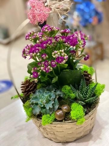 Sepet İçinde Kalançho Çiçeği 2