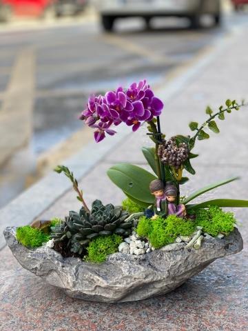 Taş Saksıda mini Orkide ve sukulentnçho