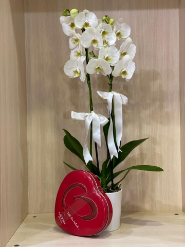 Beyaz Çift Dal Orkide ve Çikolata