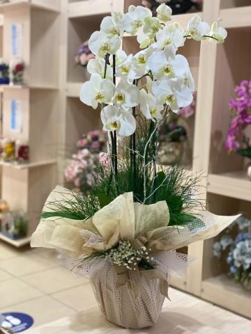 Orkide Beyaz