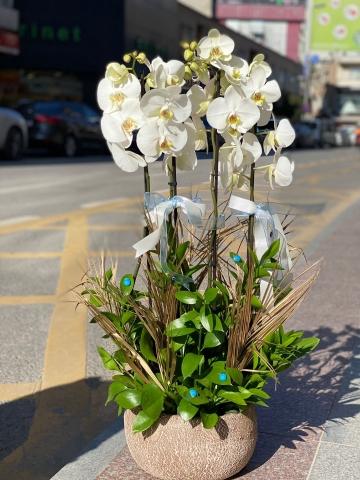 Otantik Seramik Saksıda Beyaz Beyaz OrkideOrkide