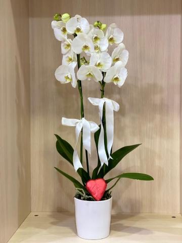 Kalpli Çikolata ve Beyaz Orkide