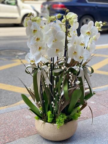 Seramik Saksıda Beyaz Orkide